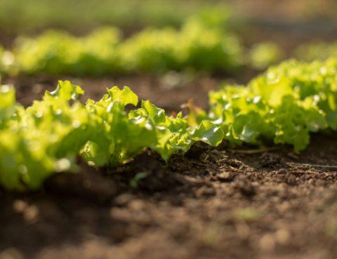 Imprese agricole, 10mila ettari di terreni all'asta 10mila. Agevolazioni e finanziamenti per i giovani agricoltori