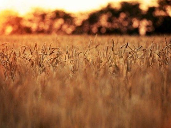 Bando Isi Agricoltura 2019-2020: pubblicate le regole per lo sportello informatico